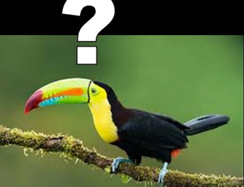 Ni mammouth, ni colibri ! un article de Paul Devin